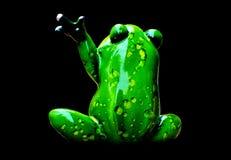 Amphibian, Frog, Tree Frog, Ranidae stock image