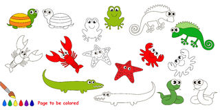 Amphibian set colorful. Amphibian colorful set  in vector. Under water animals and amphibians Stock Photography