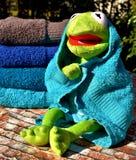 Amphibian, Stuffed Toy, Plush, Frog Royalty Free Stock Images