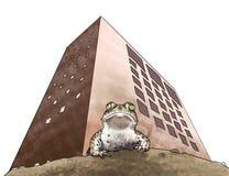 Amphibians conservation Royalty Free Stock Image