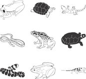 Amphibians and reptiles. Black and white sketches of amphibians and reptiles Stock Images