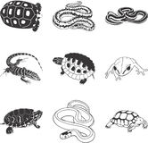 Amphibians and reptiles. Set of nine illustrations of amphibians and reptiles on white background Royalty Free Stock Images