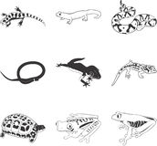Amphibians & Reptiles. An illustrated icon set of amphibians and reptiles Stock Photos