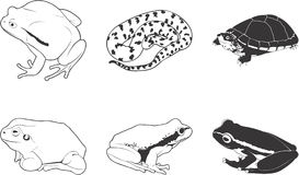Amphibians and Reptiles. An illustrated icon set of amphibians and reptiles Royalty Free Stock Photos