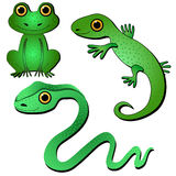 Amphibians and reptiles. Snake, frog, lizard on white background royalty free illustration