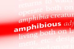 amphibie image stock