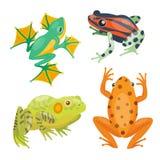Amphibie drôle sauvage drôle et d'isolement de bande dessinée de bande dessinée de grenouille d'icône animale tropicale de nature illustration stock