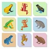 Amphibie toxique de crapaud de faune de bande dessinée de vecteur de grenouille de froggy d'illustration drôle verte animale trop illustration de vecteur
