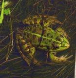 Amphibien stockbilder