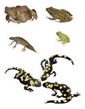 Amphibies illustration de vecteur