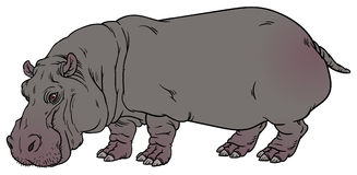 Amphibius d'hippopotame ou cheval de rivière Image stock