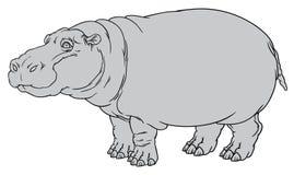 Amphibius Hippopotamus ή ιπποπόταμος Στοκ εικόνα με δικαίωμα ελεύθερης χρήσης