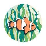 Amphiprion Ocellaris Clownfish και φύκι ελεύθερη απεικόνιση δικαιώματος