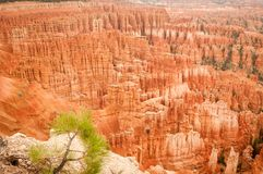 Amphithéâtre 2013 de Bryce Canyon Image libre de droits