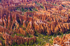 Amphitheater of Hoodoos from Inspiration Point, Bryce Canyon National Park, Utah, USA. Amphitheater of Hoodoos from Inspiration Point, Bryce Canyon National Park Stock Image