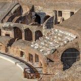 Amphitheatre Colosseum in Rome Stock Foto's
