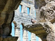Colosseum Pula. Amphitheatre in Pula, ancient Roman Arena with the bird Stock Images
