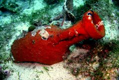 Amphora. Underwater in adriatic sea Royalty Free Stock Photo