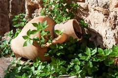 Amphora in the garden Royalty Free Stock Photos