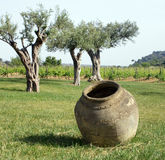 Amphora jar and wine plant Stock Photography