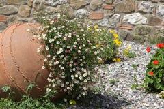 Amphora mit Blumen Stockbild