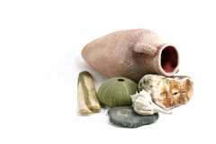 Amphora mit Shells - 2 Lizenzfreies Stockbild