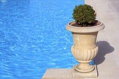 Amphora på en simbassäng royaltyfri foto