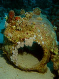 Amphora from ship wreck. Resting on the seabed covered with corals Royalty Free Stock Image