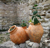 amphoras Стоковое фото RF