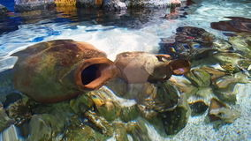 Amphoras fish underwater. Group of Amphoras and fish underwater stock footage