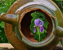 Amphore und Blume Stockbild