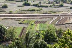 Ampia area di agricoltura alla campagna di Ninh Binh Fotografia Stock Libera da Diritti