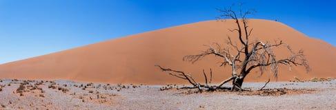 Ampia duna 45 di panorama in sossusvlei Namibia Immagini Stock