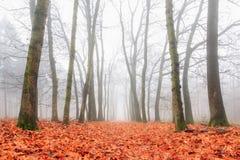 Ampia nebbia di autunno fotografia stock