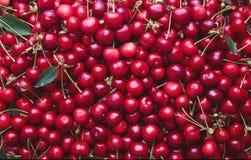 Ampia raccolta delle ciliege rosse fresche fotografie stock libere da diritti