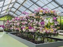 Ampia raccolta delle piante dell'orchidea Immagine Stock Libera da Diritti