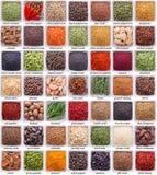 Ampia raccolta delle spezie e delle erbe differenti Fotografia Stock