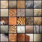 Ampia raccolta delle strutture animali della pelliccia Fotografia Stock