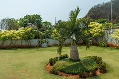 Ampia vista del giardino verde dal punto di vista con una palma minuscola nella priorità alta, Kailashgiri, Visakhapatnam, il 5 m Immagine Stock Libera da Diritti