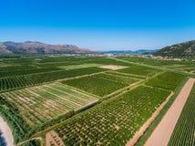 Ampie aree di terra e dei raccolti fertili in Croazia del sud Fotografia Stock