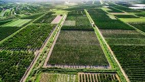 Ampie aree di terra e dei raccolti fertili in Croazia del sud Fotografia Stock Libera da Diritti