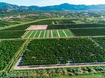 Ampie aree di terra e dei raccolti fertili in Croazia del sud Immagine Stock