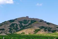 Ampie piantagioni dell'uva sotto un cielo blu sui precedenti di alta scogliera ripida Immagine Stock