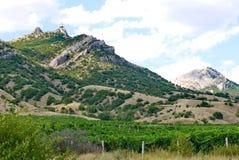 Ampie piantagioni dell'uva sotto un cielo blu sui precedenti di alta scogliera ripida Fotografie Stock