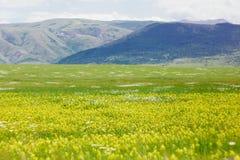 Ampio campo con i wildflowers gialli su un fondo delle montagne blu, colline pedemontana Le montagne ed i campi della Crimea fotografie stock libere da diritti