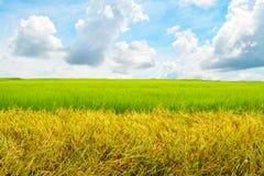 Ampio campo di mais in cielo blu Fotografia Stock