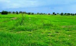Ampio campo verde Fotografia Stock Libera da Diritti