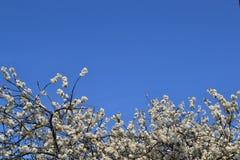Ampio cielo blu fotografia stock libera da diritti