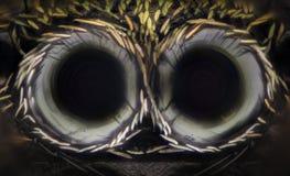 Ampliação extrema - a aranha de salto eyes, vista dianteira Fotos de Stock Royalty Free
