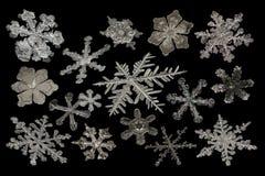 Ampliação extrema - compilação real do floco de neve no fundo preto fotos de stock